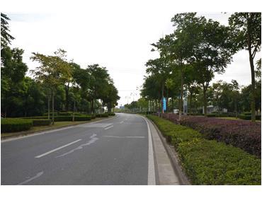 鸿桥路绿地养护