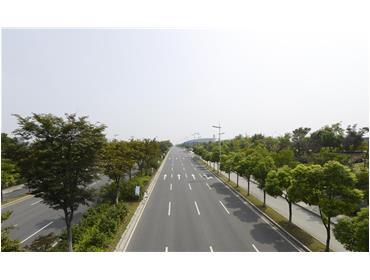 贡湖大道绿地养护