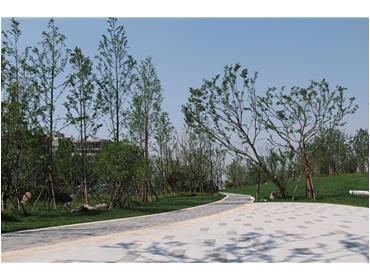 新加坡•南京生态科技岛滨江风光带景观绿化三标段