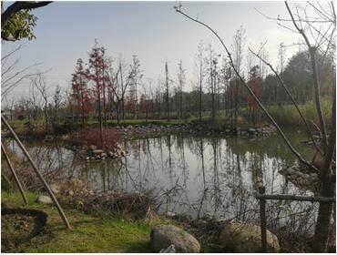 海绵体公园
